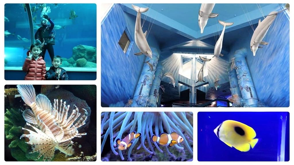 澎湖水族館