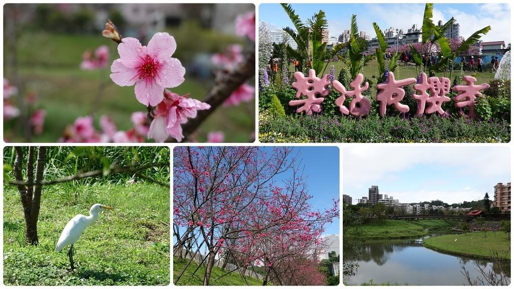 樂活夜櫻季-東湖櫻花林